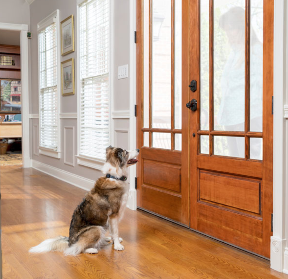 Help!  My Dog  Always Barks at the Doorbell