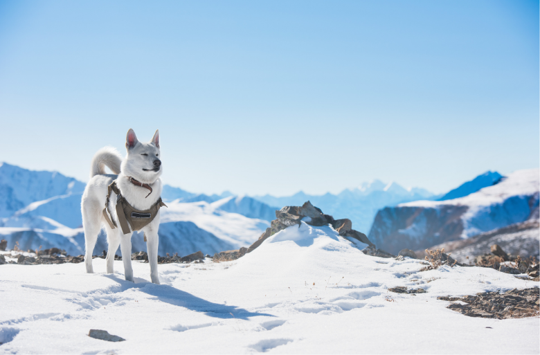Trekking Through the Snow with Your Pup